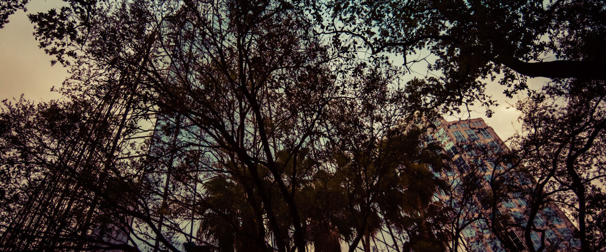 downtowntrees3