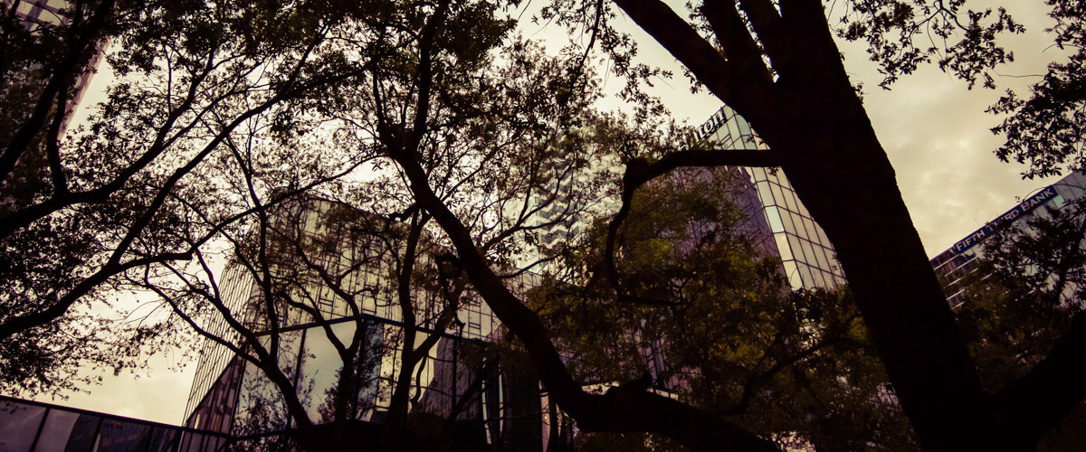 downtowntrees4